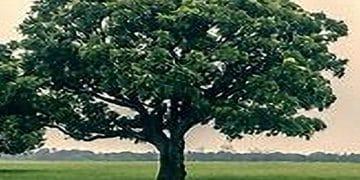 Arborist Consultation