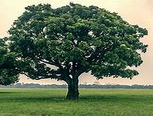 arborist consultation in San Leon TX