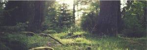 healthy landscape