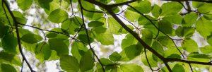best-arborist-in-houston-healthy-trees