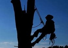 our tree services