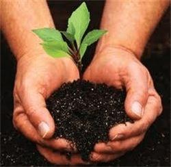 Tree Planting League City TX
